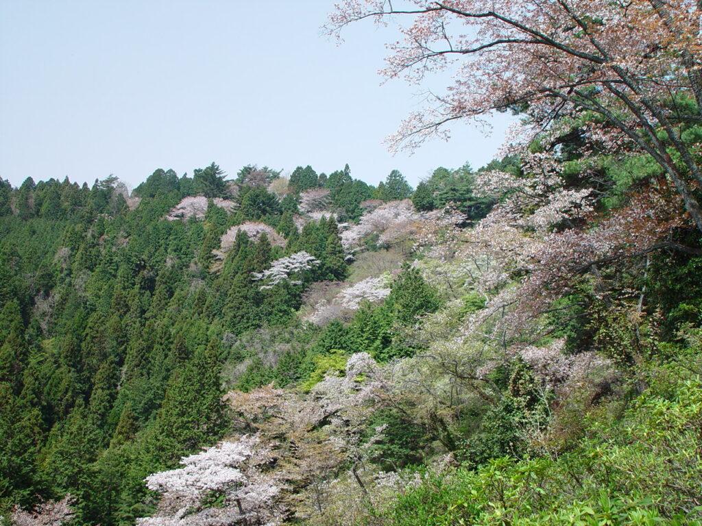 Konpira Koen Ryokuchi